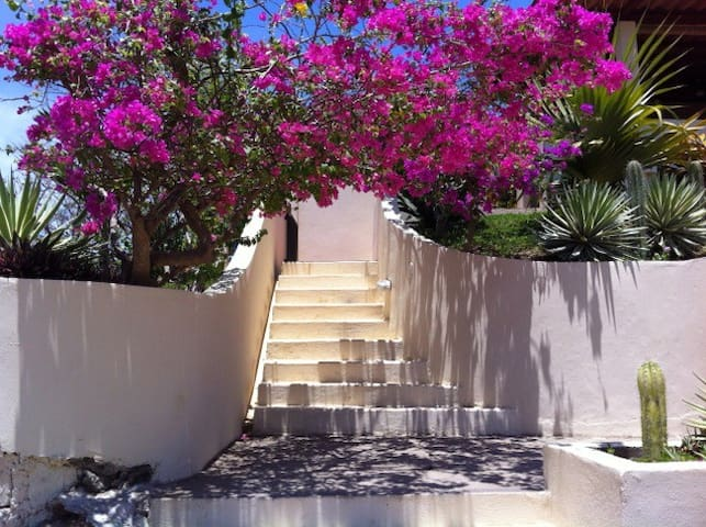 Bougainvillea at entry stairs