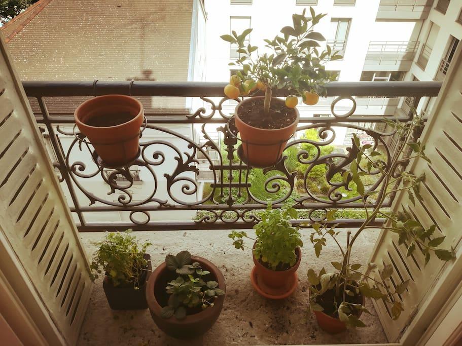 balcon salon
