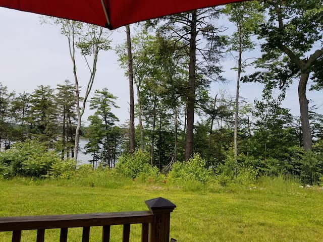 View from the back porch from the table.