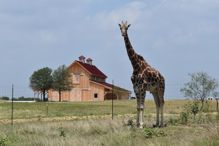Giraffe-inspired Cabin, inside an Animal Sanctuary