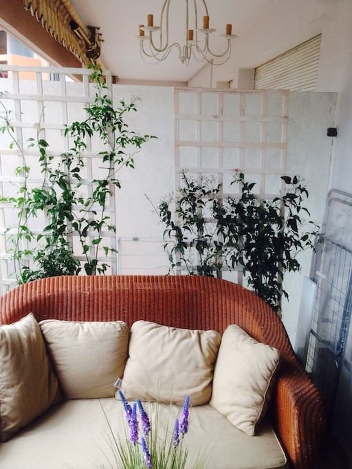 La terrasse à la provençale , le jasmin florissant