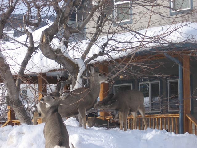 SKI CANADIAN ROCKIES, KIMBERLEY BC - Kimberley - Dům