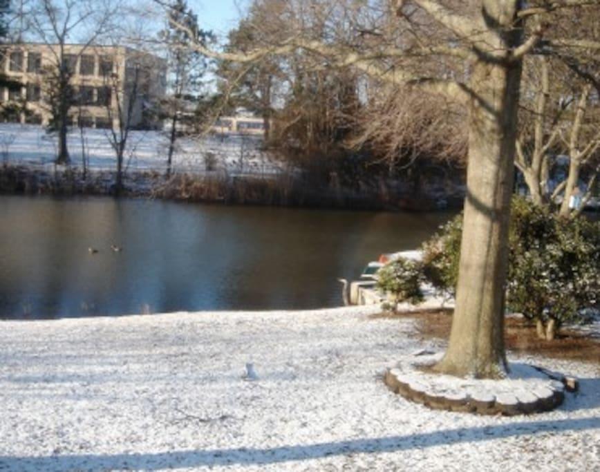Back yard, Winter