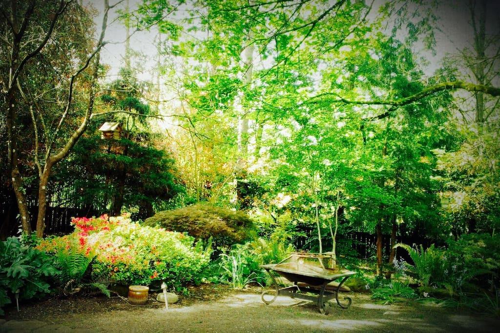 Tranquil back yard