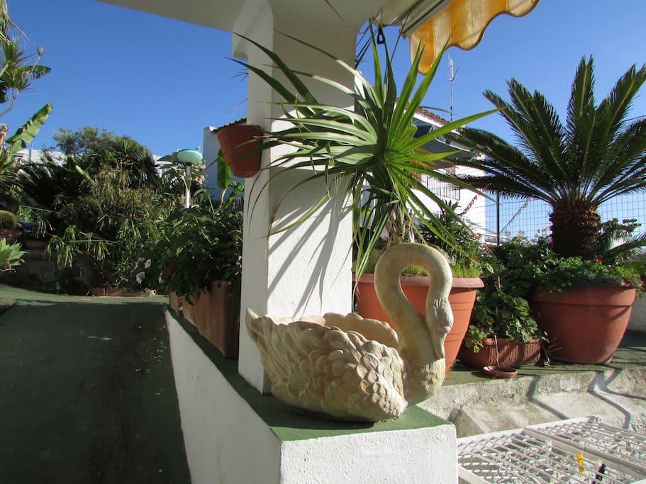 Piccolo appartamento in villa forio appartamenti in for Piccolo bagno mediterraneo