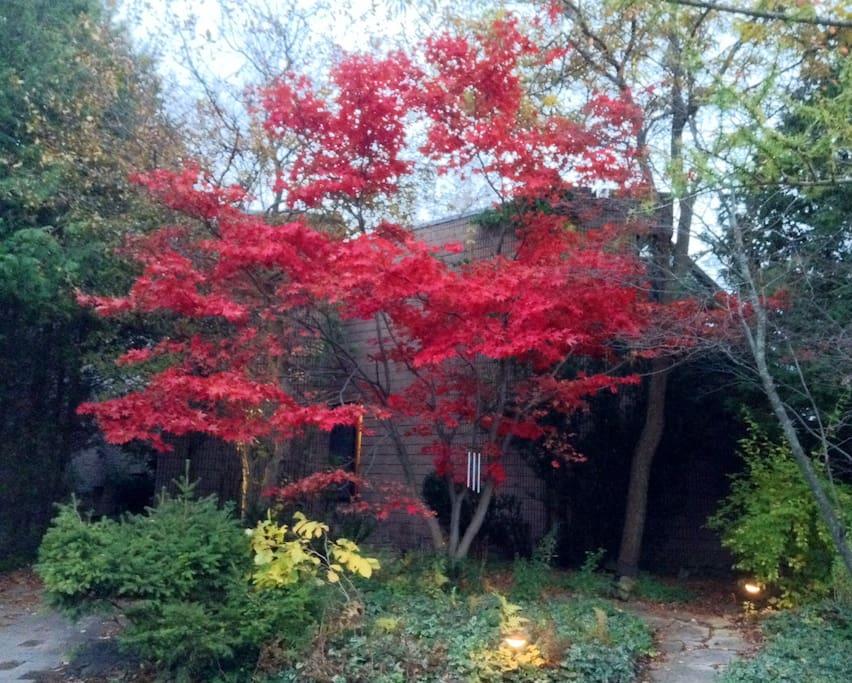 Front yard autumn