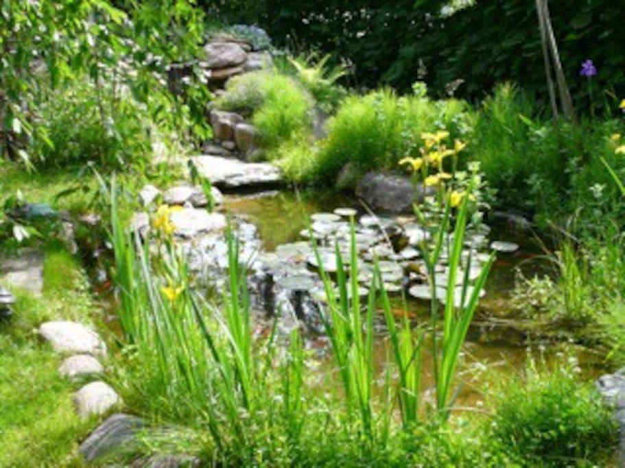Secret koi pond in the gardens.