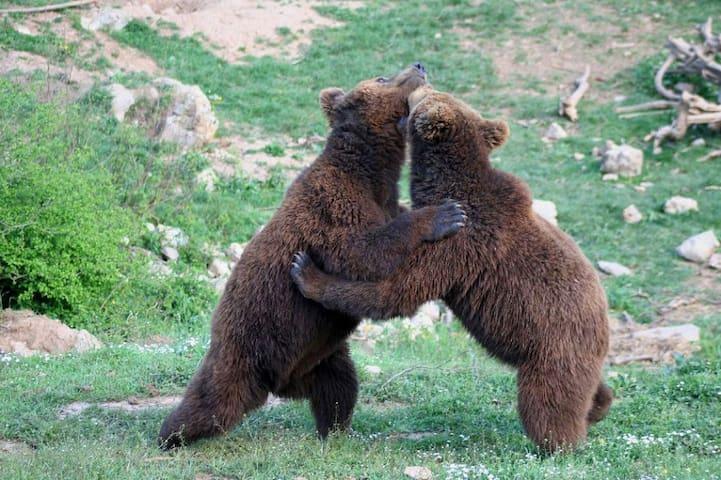 Utociste za mlade medvjede Kuterevo udaljeno 25 km