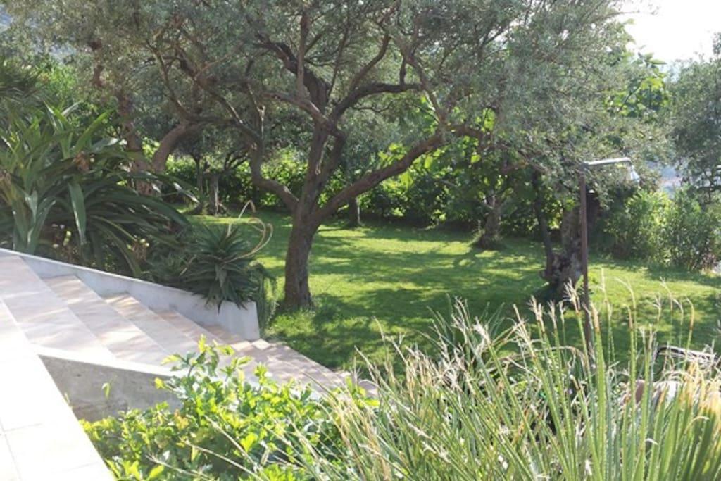 Grande giardino