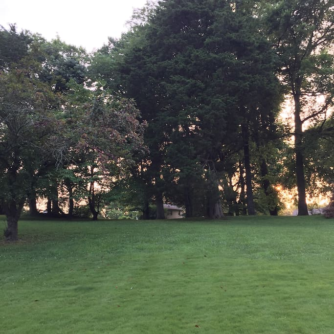 Looking toward the back of the property, you will see deer, turkeys, rabbits, squirrels and a very shy groundhog.