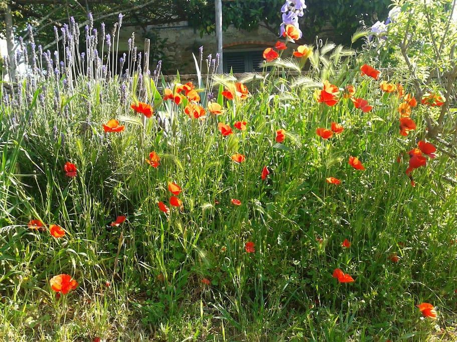 I fiori del campo