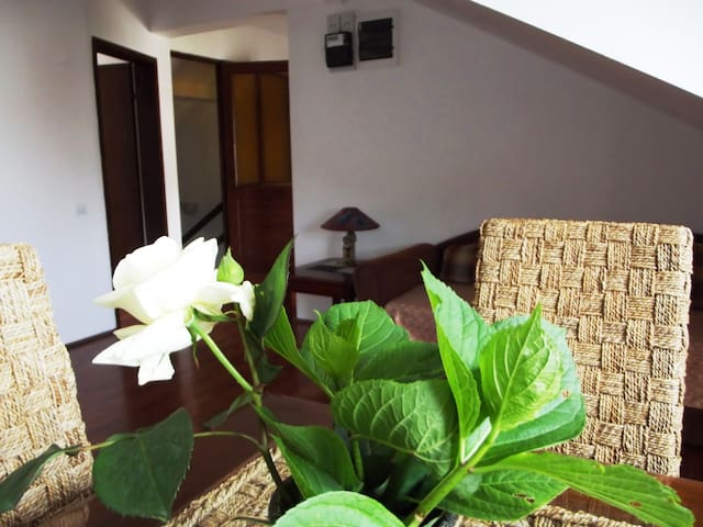 Lovely apartment in Centre of Budva