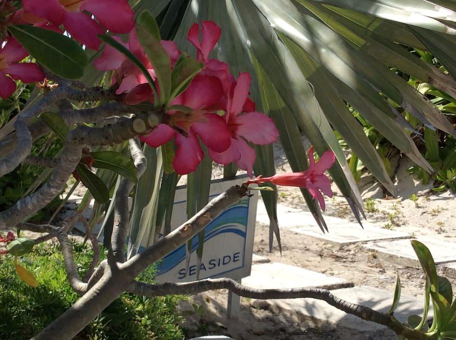 """Seaside"" cottage on the beach"