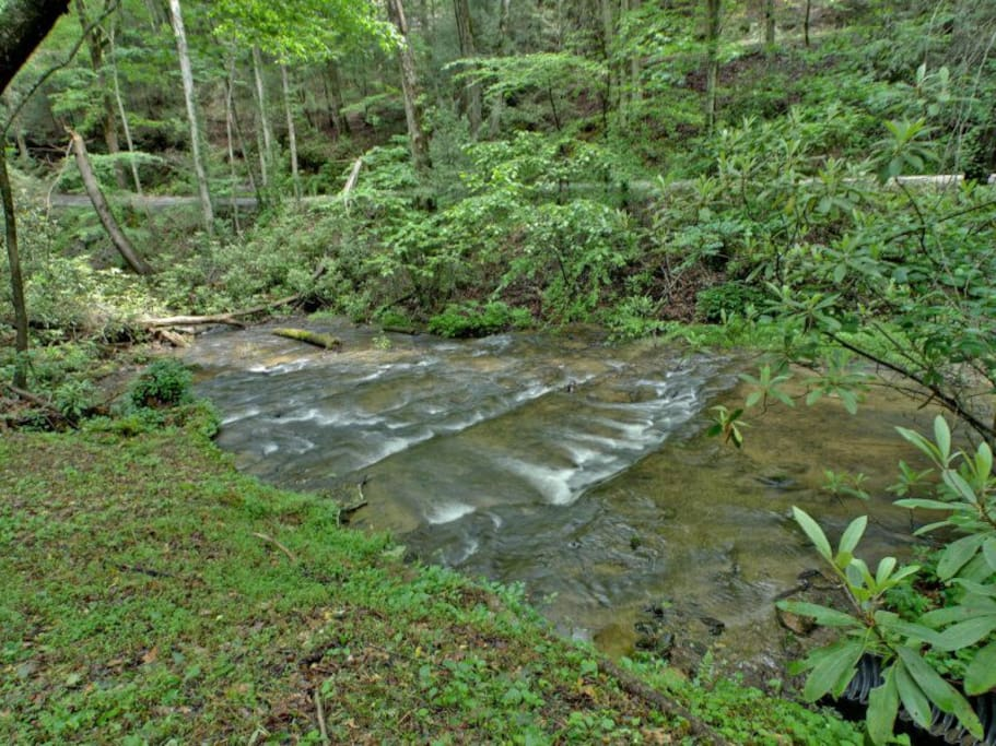Laurel Creek Sits Right in Front of Bear Pause
