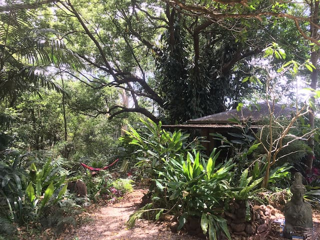 Set in a beautiful bush setting under the trees, the cabin is very private with your own garden
