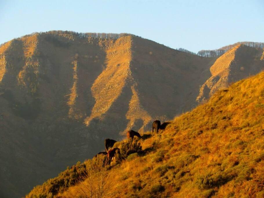 cavalli selvaggi sopra casa
