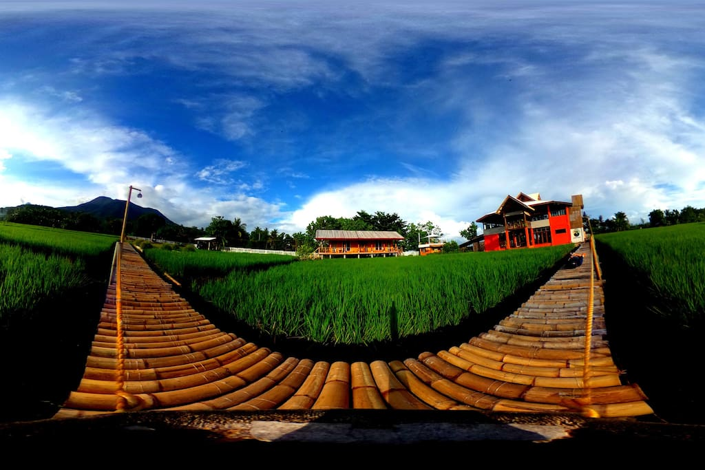 Panorama of the volcano, rice paddies and the property