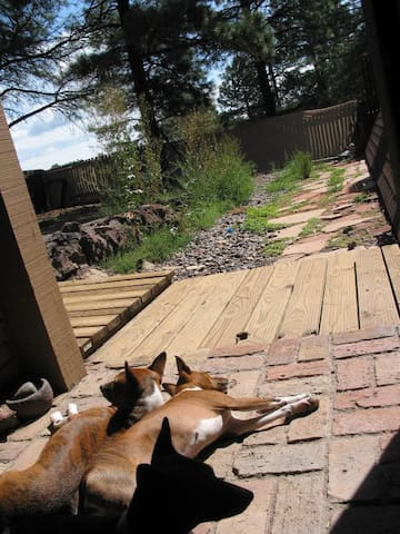 Basenjis out the back door into the private fenced yard