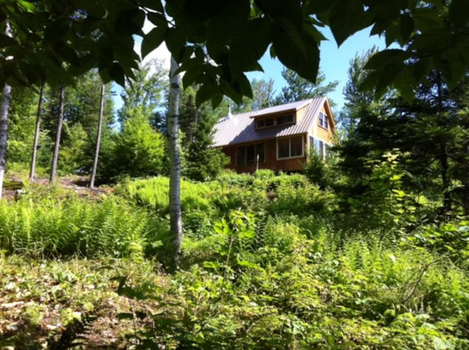 View from the Stream of the Cabin