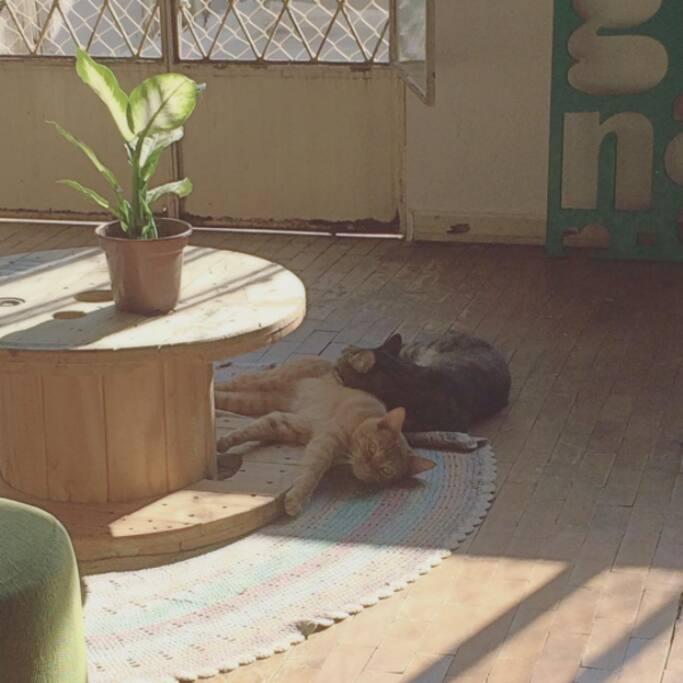 Sala com terraço/sacada