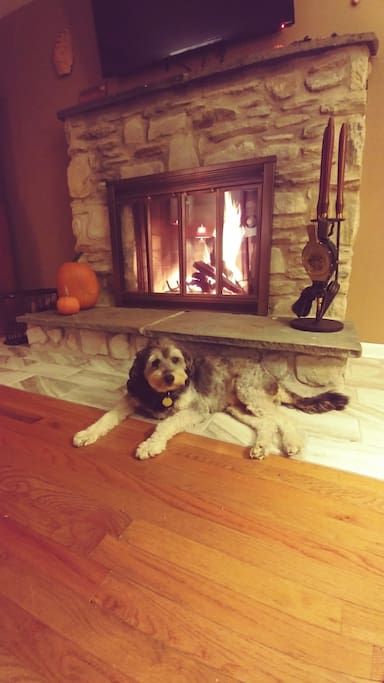 Frodo relaxing by the fire on a chilly fall evening
