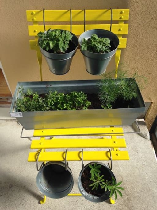 fresh herbs for  cooking