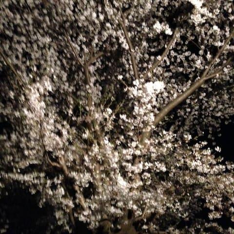 House with Big cherry tree,open terrace - Hachiōji-shi - House