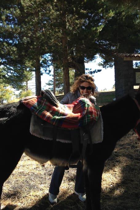 Etna experience by donkey