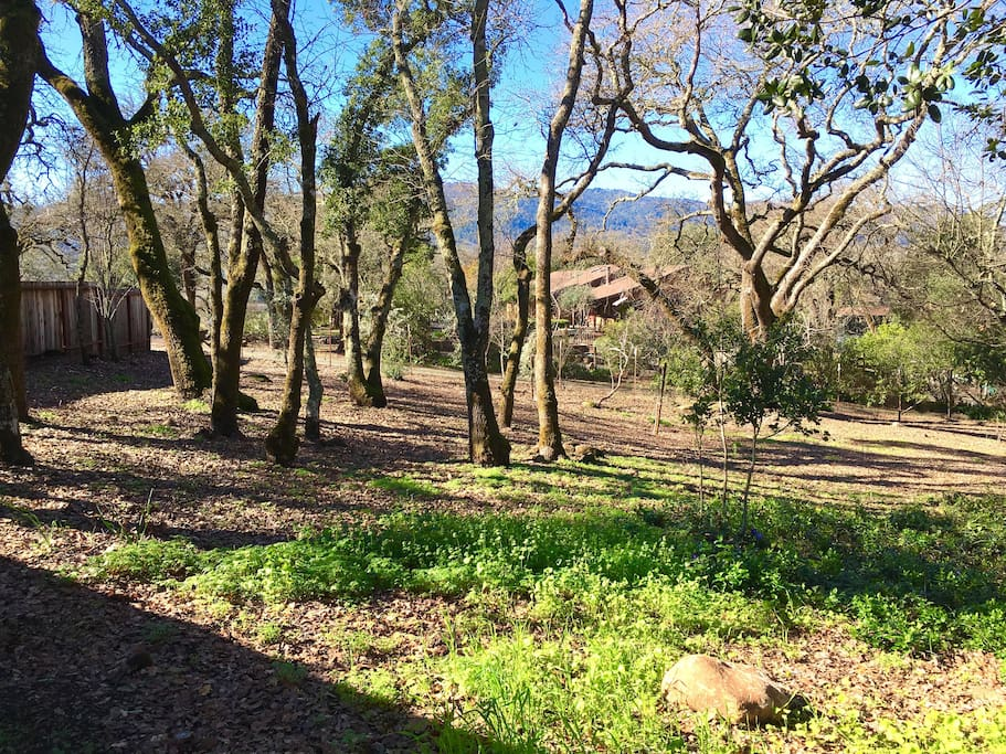 secluded wooded location