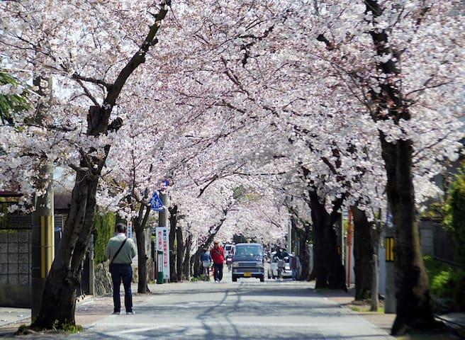 Kyoto Autumn Maple villa