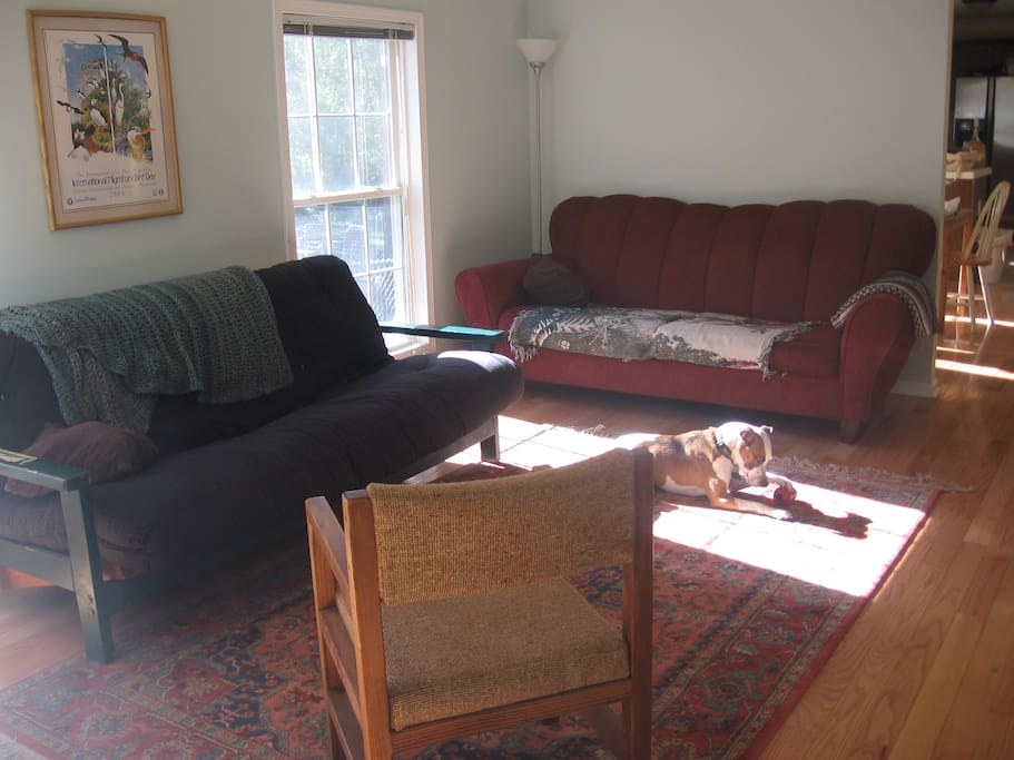 Main living area. Relax on the couch with a book or use the wifi. Pet the dog if you like.