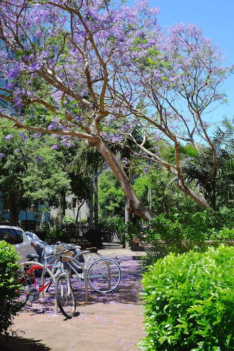 Green lushness and bike racks at the doorstep.
