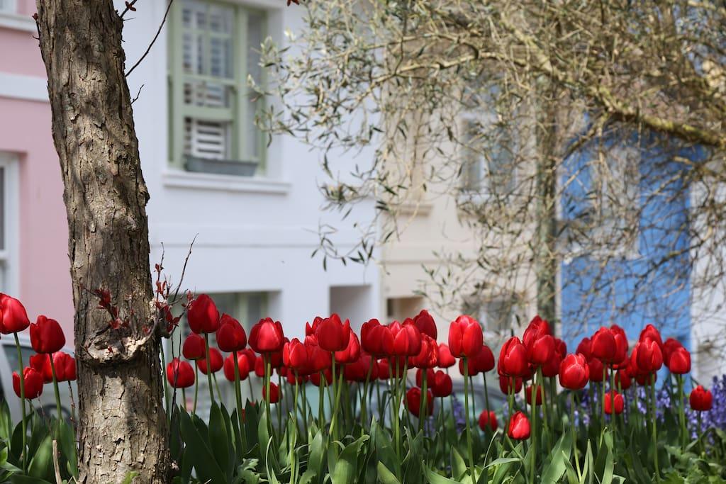Beautiful flowers in our neighbourhood