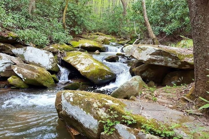 Beauty in the Brushies - Moravian Falls - Casa