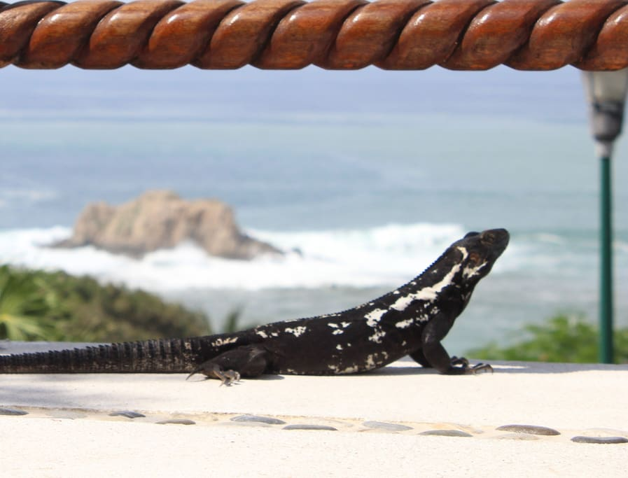 Real Huatulco Experience