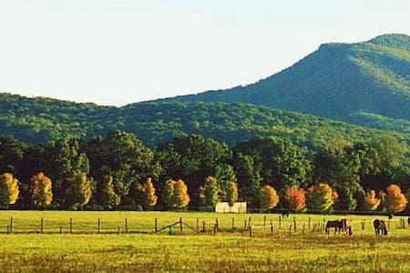 Horse Farm in the Shenandoah Valley - Edinburg