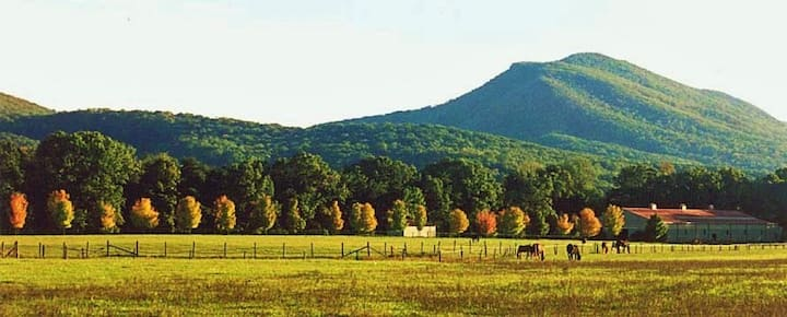 Horse Farm in the Shenandoah Valley
