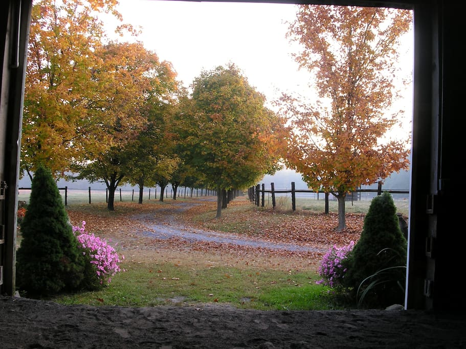 Looking out of the indoor arena down the tree lined driveway.