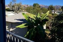 The balcony looks right out at treetops and mountains.  Did I mention the AVOCADO tree?  They are in season February til they are all picked, usually October.