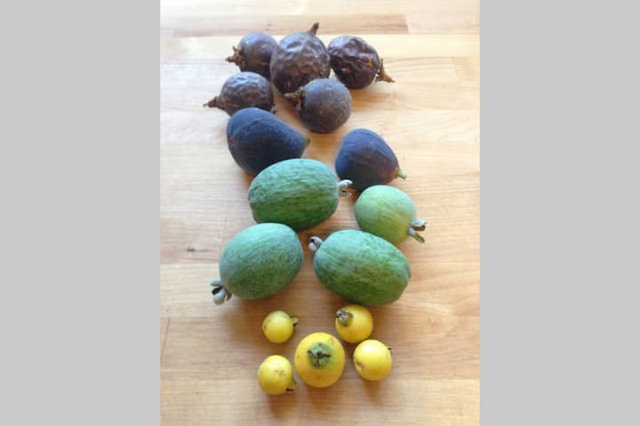 Some of the tropical fruits that grow on the property - passionfruit, figs, pineapple guavas, and strawberry guavas.
