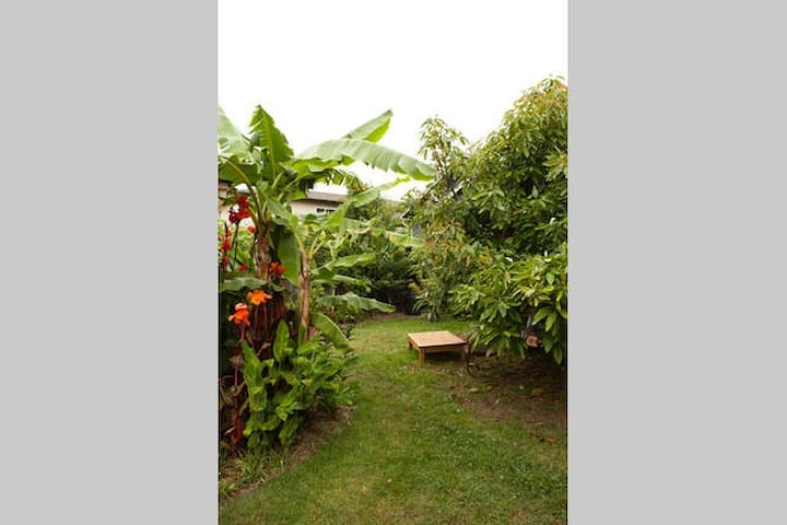 During the spring, summer, and fall the tropical garden is delightful to lounge in.  During winter things die back a but often weather is still nice to sit under the avocado tree.
