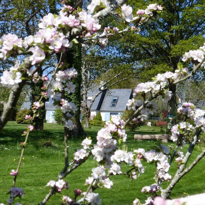 Notre jardin au printemps