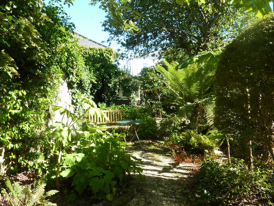 Secluded garden with tree ferns and Banana Plants
