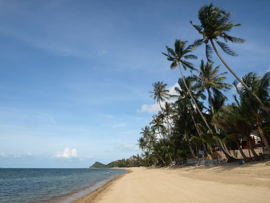 Our fabulous sandy beach, with warm, calm water, and breezy coconut trees, just 30 meters from the house.