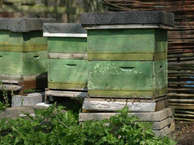 Our bees provide honey for breakfast