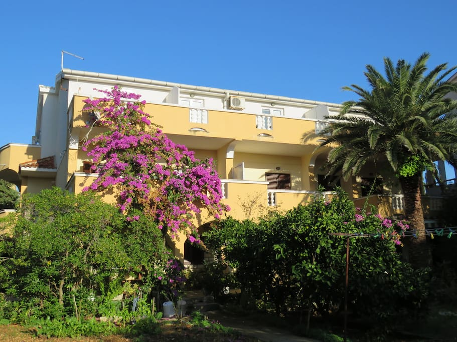 Palma Novalja - house