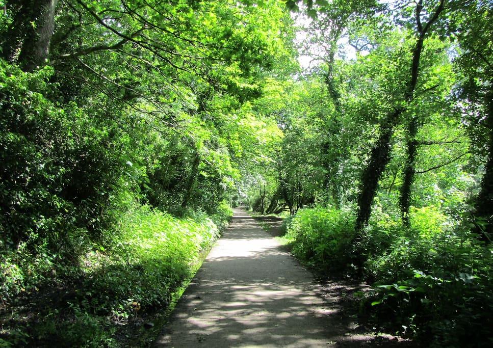 Local Park (Bushy Park) in summer 15 min. walk away