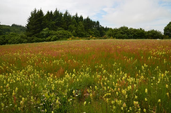 This is a bit higher on the mountains - wonderful fields of flowers - just as nature intended!