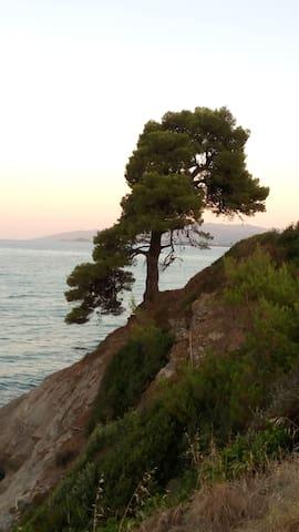 Olive tree House - Salonikiou - Casa