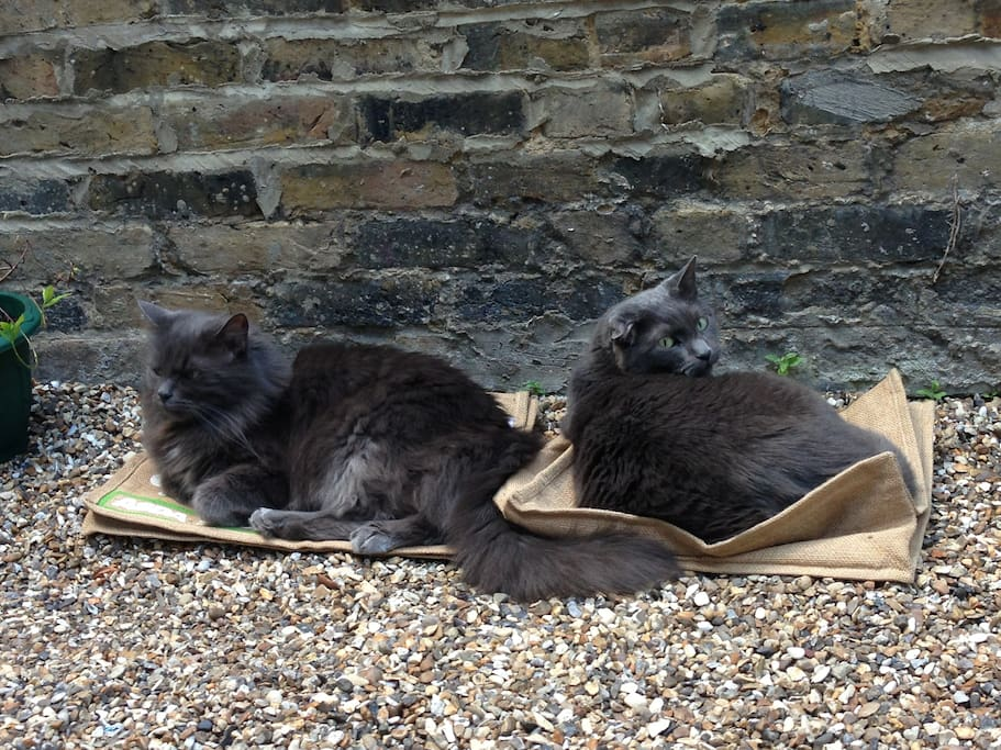 These are Nermal and Haggis enjoying the sunshine :)